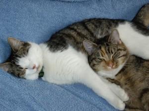IMGP1068 300x225 Frühkastration bei Katzen – Ja oder Nein?