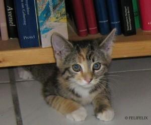 Tinky FeliFelix Kopie 300x249 Schimpfen Sie nicht mit Ihrer Katze